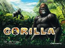 Игровой слот Gorilla