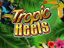 Игровой слот Tropic Reels